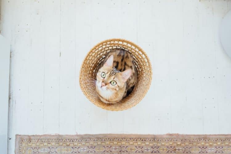 Er zijn hondenmensen en er zijn kattenmensen. Niet iedereen geniet van de aanwezigheid van een kat, maar aangezien de kattencafés in Nederland hip and happening zijn gokken we erop dat toch veel mensen deze pluizenbolletjes wel kunnen waarderen. Wij in ieder geval wel! In iedere grote stad zit tegenwoordig wel een kattencafé: het is er een walhalla voor kattenliefhebbers. De kattencafés zijn een oplossing voor mensen die te maken hebben met (harteloze) huisbazen die geen huisdieren dulden: voor je dosis kattenknuffels en kattendates duik je het café in. Wij maakten een lijst met de 10 leukste in Nederland waar jij je kopjes kunt halen!