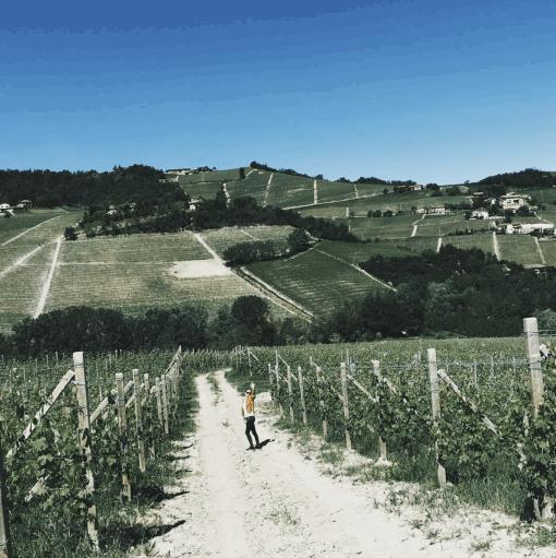 Barolo=Barbaresco-wijngebied-piemonte-wijn.Tijdens mijn reis door Europa met verbouwde camperbus kom ik langs de mooiste plekjes. Met dit keer mijn favoriete wijngebied van Italië. Mocht je in Noord-Italië komen vergeet dan vooral niet het wijngebied Barolo en Barbaresco aan te doen. Ik vertel je alle goede plekken