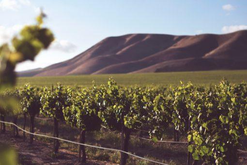Biodynamische wijn wat is dat nou eigenlijk? Smaak het anders? Hoe wordt het gemaakt? Alles daarover vind je hier!