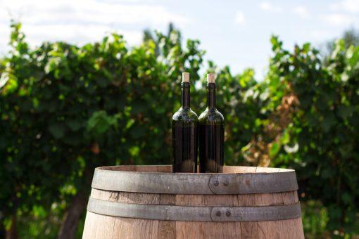 Wijnen in Puglia. Wijnsoorten in Puglia. Wijn drinken in Puglia. De wijncultuur van Puglia. Primitivo. Wijngaarden bezoeken